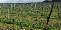 Cette démarche a été entamée en 2007 sur les domaines Rémy Martin, avec la certification Agriculture Raisonnée. Qui a fait place au label HVE en 2012.