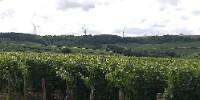 Photo de vignes dans le secteur de Prehy /Chablis, déjà en situation de co-visibilité avec un parc éolien situé à quelques kilomètres