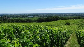 Four out of five HVE farms are in the wine industry. Nearly one in five certified estates is in Bordeaux.