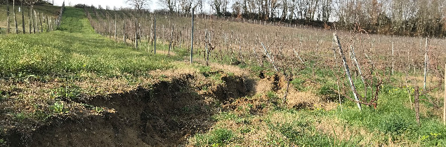 Heavy rains wreaked havoc in the vineyards of two Gironde winegrowers