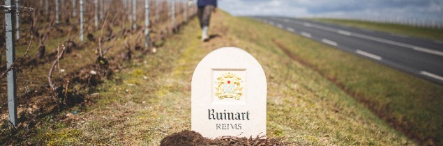 Since 2014, Moët Hennessy-Ruinart's own vineyards have rolled out 120 areas dedicated to biodiversity, and grass cover is used over more than 95% of vineyard acreage.