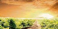 Les chercheurs ont dessiné quatre scénarii d'adaptation du vignoble au changement climatique en faisant varier deux critères : la localisation et l'innovation.