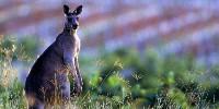 En 2017, l'Australie resterait le premier pays producteur de vin de l'Hémisphère Sud.