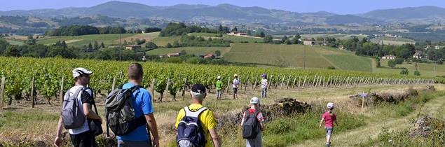Beaujolais has secured global recognition for its rich geological heritage.
