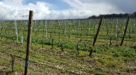 The initiative was launched in 2007 on Rémy Martin estates, through sensible farming certification, paving the way for HVE certification in 2012.