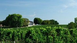 "By converting the 140-hectare vineyard at its Château Les Vergnes, Univitis is proud to announce ""a large-scale conversion project, totally unique in the world of co-operative wineries""."