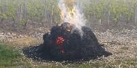 Les vignerons achètent de la vieille paille, humide, afin de générer le plus possible de fumée