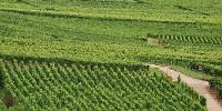 En France, le rythme des conversions en viticulture est de 3 % des surfaces.