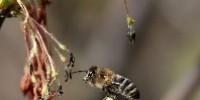 Les ruches connectées permettront de suivre l'évolution des colonies d'abeilles.