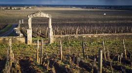 Quand transmission familiale rime avec redressement fiscal dans le vignoble bourguignon