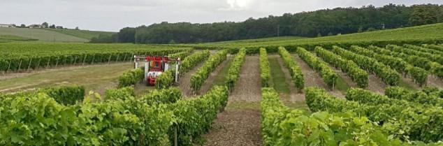 Viticulture / oenologie  Viticulture  : Le calendrier de