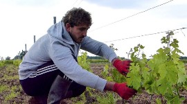 "Thomas Gomes claims that as he is ""starting from scratch' he can afford to have low-cropping vines (25 to 30 hl/ha) in his vineyards."