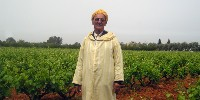 Ce sont de petits exploitants qui cultivent et entretiennent les vignes. La Société des Grands Crus de l'Ouest leur achète le raisin et les accompagne tout au long du cycle de production.