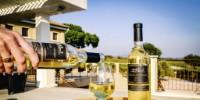 Le domaine comporte, en outre, un vignoble de 72 ha d'un seul tenant classé pour l'essentiel en côtes-de-provence et en côtes-de-provence
