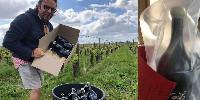 Sébastien David défie l'Etat pour sauver son vin nature