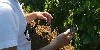 Avec l'application Apex Vigne, on peut évaluer rapidement la croissance de la vigne