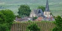 En 2016, le prix moyen du foncier viticole en Champagne a connu un très léger tassement... Dans le secteur de la grande montagne de Reims, les prix à l'hectare étaient situés dans une fourchette de 700000€ à 1,6 million €