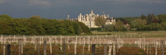 The vines at Château de Chambord were planted in 2015. They will produce their first official vintage in 2020.