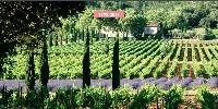 L'appellation Coteaux varois en Provence couvre 28 communes du Var pour une surface en production de 2700 ha. Cette surface est récemment passée à 2900 ha suite à une révision simplifiée de son aire en 2017