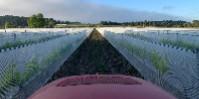 Ayant perdu 600 000 euros à cause de la grêle, il couvre de filets 25 hectares de vignes