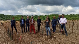 290 disease resistant grape varieties will be planted. In three years' time, the twenty best will be replanted on a larger scale.