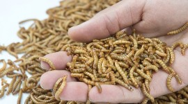 The French company feeds its Tenebrio Molitor worms on cereal by-products.