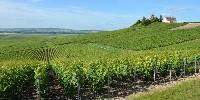 Les outils de travail du sol sont mal adaptés aux micro parcelles de vignes étroites.
