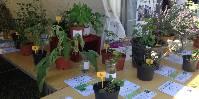 Sur le salon Tech & Bio, l'Institut Français de la Vigne et du Vin propose des jeux sur la reconnaissance des plantes et huiles essentielles afin de sensibiliser les vignerons.