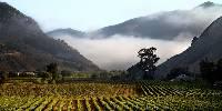 La Californie devrait connaître une récolte moyenne cette année