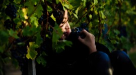 Zhao Wei has become an ambassador for the Bordeaux wine region and was inducted into the Saint-Émilion Jurade in 2012.