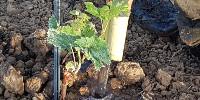 « Une plantation est la repique de la pépinière à la parcelle d'un nouveau-né, qu'il faut arroser » alerte David Amblevert.