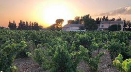 Deux jeunes viticulteurs raflent le domaine de Panisse