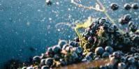 Comptant pour le quart de la production australienne, la syrah en est le cépage emblématique, sous la dénomination anglo-saxonne «shiraz».