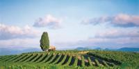 Selon les estimations des caves coopératives du Languedoc-Roussillon, les disponibilités en vin de la région sont au plus bas depuis six ans.
