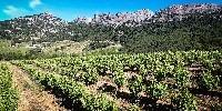 La SCIC Rhonéa vignobles compte environ 560 sociétaires. L'objectif est d'atteindre les 5000 d'ici 2022.