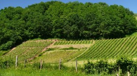 Le vignoble d'Irouleguy, le vignoble le plus occidental du bassin Sud-Ouest.