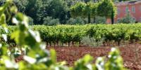 En 2019, les rendements provençaux vont dépendre de la pluviométrie du mois d'août.
