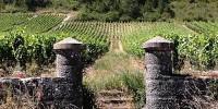 En ce début de campagne 17/18, les stocks sont faibles en Bourgogne : le vrac a vite été commercialisé l'an dernier et le gel a réduit drastiquement les volumes de vin disponibles.