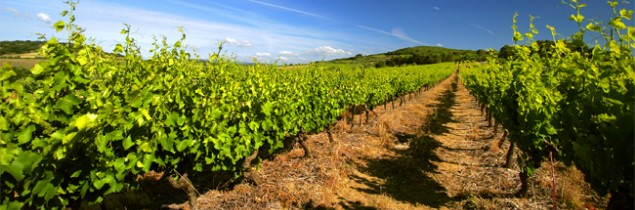 According to estimates by the Languedoc-Roussillon co-operative wineries, the region's wine supplies are at their lowest level in six years.
