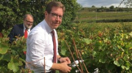 Sizeable volumes are on the cards this year in Burgundy.