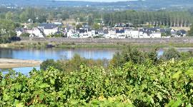 Terra Hominis veut prendre racine dans le vignoble de Loire