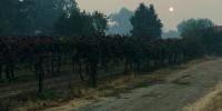 En Sonoma, un pyromane a été aperçu une flamme à la main par des vignerons, qui n'ont pas réussi à l'arrêter dans sa fuite.