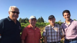 From left to right, in the Artaban vineyard: Jean Bernard Abassie, chairman of Vignerons du Pays d'Ensérune; Robert Galinié, chairman of the 'Émancipatrice paysanne' association; Christophe Schneider, research engineer for varietal innovation at INRA Colmar; and Rémy Cailliatte, deputy head of the plant improvement biology department at INRA Avignon.