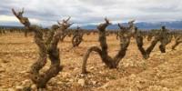 La baisse des prix des raisins rencontre une vraie levée de boucliers des producteurs espagnols.