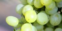 La tendance à la hausse du prix du raisin se poursuit dans le vignoble champenois.