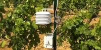 Une station météo installé dans une parcelle de vigne par Terra Clima
