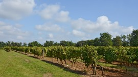 Approved by the regional wine council, the application for a quota of 3,474 hectares underscores the Cognac wine industry's confidence in the sustainability of its export development.