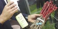 Si les échantillons de vin de nouveaux cépages résistants sont particulièrement courus sur le salon Dionysud, les pieds disponibles le sont encore plus.