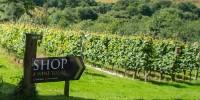 La possibilité de développer des activités oenotouristiques a toujours joué un rôle prépondérant dans le choix d'emplacement des vignes en Grande-Bretagne