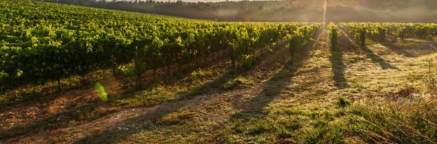 An end to the use of glyphosate will result in significant extra costs for winegrowers.
